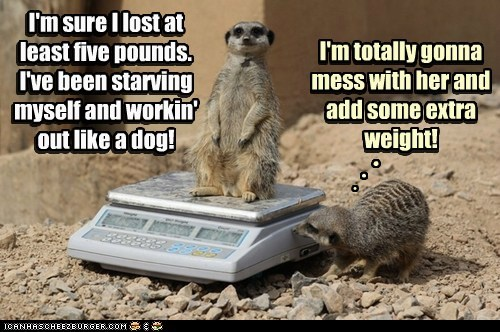 scale,Meerkats,lost weight,prank