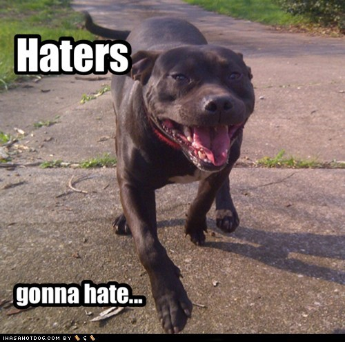 haters gonna hate dogs pitbull happy - 6728670208