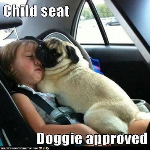 dogs,pug,child seat,kids,car,cuddles