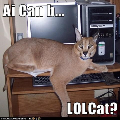lolcat dreams computer caption lynx - 6729171200