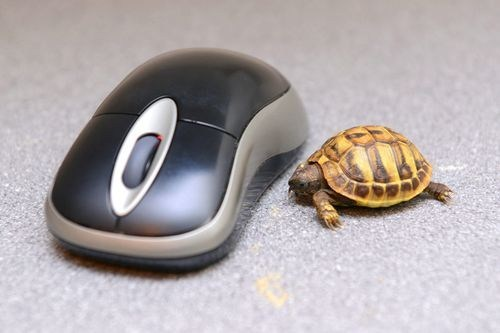 changes comments turtle computer mouse announcement