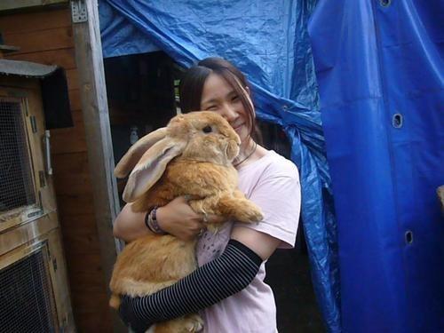 Bunday happy bunday hugs rabbit bunny - 6729411072