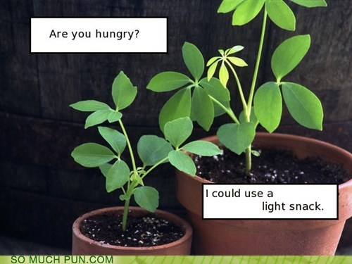 hungry plants photosynthesis snack literalism light snack light double meaning