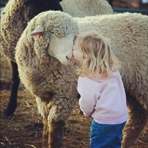 KISS,sheep,love,squee,little girl,Valentines day