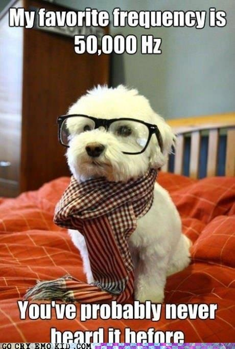 CD Hipster Dog frequency