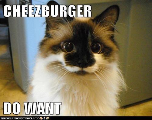 Cheezburger Image 6730046208