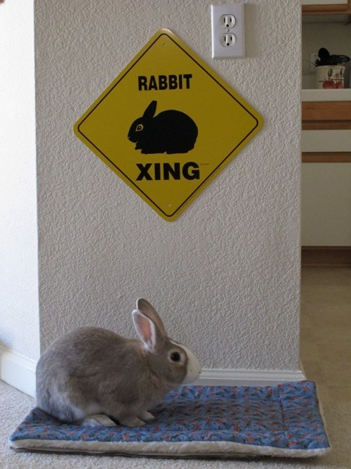 Bunday happy bunday x-ing rabbit bunny - 6730162432