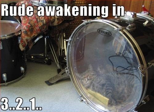 cat,kick drum