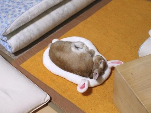 Bunday,Inception,nap,happy bunday,rabbit,bunny,sleeping