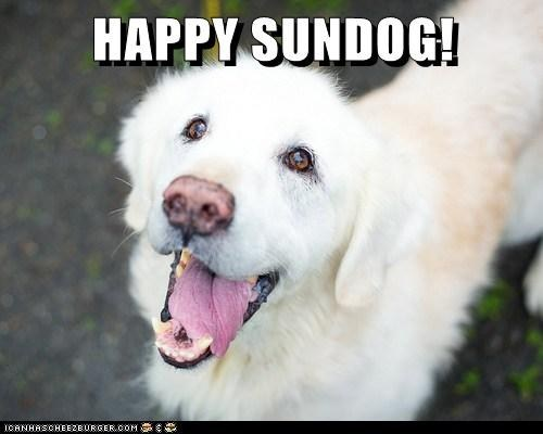 dogs happy sundog tongue happy what breed