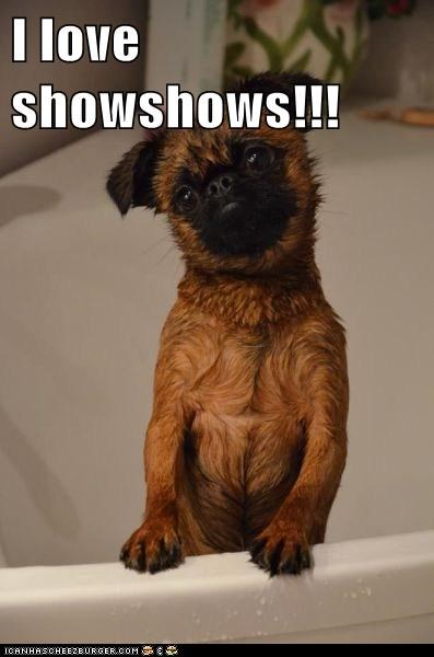 I love showshows!!!