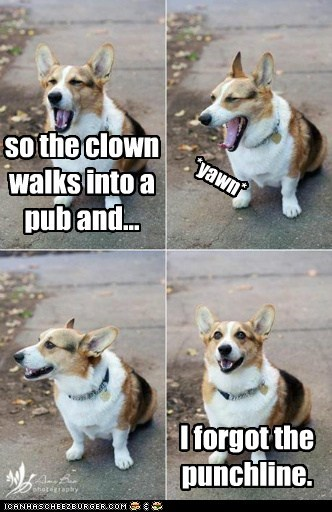 bad joke,yawn,dogs,corgi,forgot,punchline