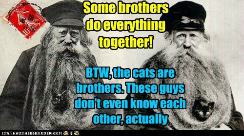 Some brothers do everything together! BTW, the cats are brothers. These guys don't even know each other, actually