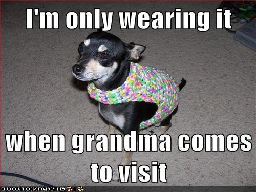 dogs,grandma,sweater,chihuahua,embarrsing