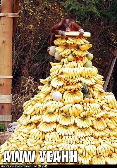 aww yeah bananas orangutan happy fruit - 6732100352