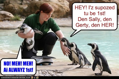 arguing weighing first penguins hierarchy - 6732178688