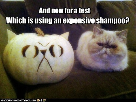 And now for a test Which is using an expensive shampoo?