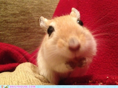 gerbil reader squee sunflower seeds treat peanut pet squee