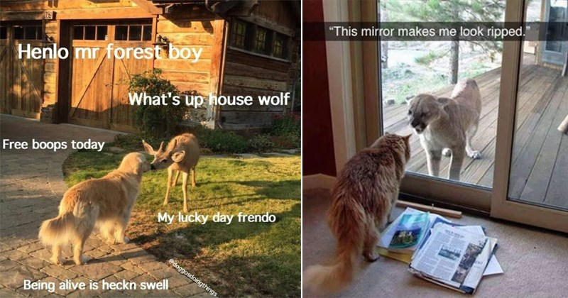cute animal memes - dogs, cats, and other adorable furry critters in memes