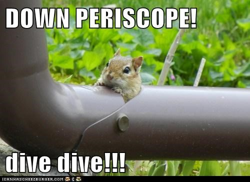 dive drainpipe down submarine sneaking squirrel chipmunk periscope