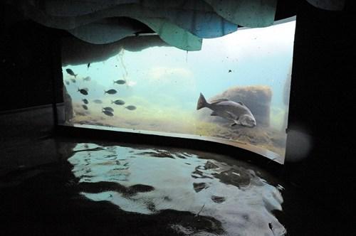 news ironic aquarium hurricane sandy - 6732697600