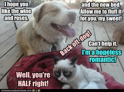 and the new bed. Allow me to fluff it for you, my sweet! Can't help it, Well, you're HALF right! I hope you like the wine and roses, Back off, dog! I'm a hopeless romantic!