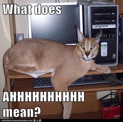 scary screaming ahhhhh computer lynxes what does it mean - 6732872960