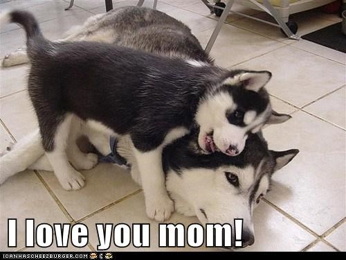 I Love You Mom I Has A Hotdog Dog Pictures Funny Pictures Of Dogs Dog Memes Puppy Pictures Doge