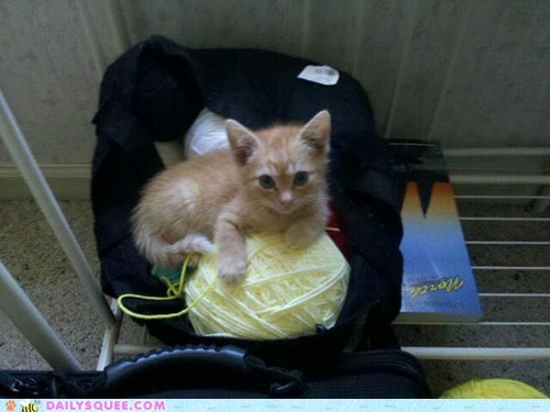 reader squee pets kitten yarn Cats squee - 6733196032