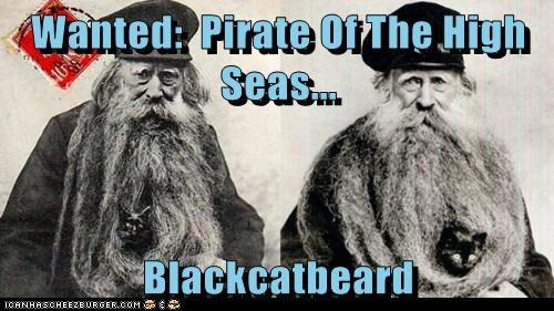 cat beard Pirate - 6733457408