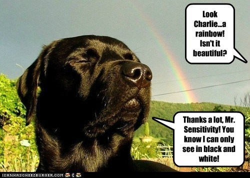 Look Charlie...a rainbow! Isn't it beautiful? Thanks a lot, Mr. Sensitivity! You know I can only see in black and white!