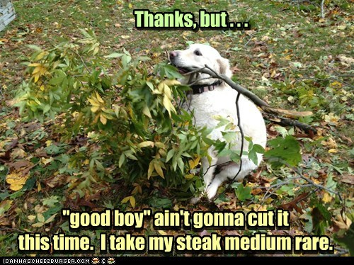 """good boy"" ain't gonna cut it this time. I take my steak medium rare. ""good boy"" ain't gonna cut it this time. I take my steak medium rare. Thanks, but . . . Thanks, but . . ."