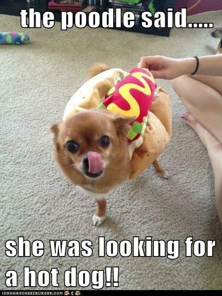 Cheezburger Image 6733804544