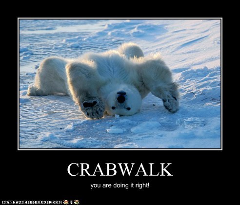 doing it right,polar bear,crab walk,lying down