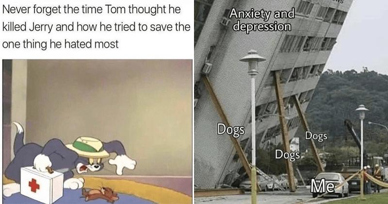 Funny memes, wholesome memes, animal memes.