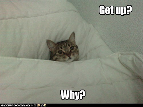 bed cozy tired captions morning get up why Cats - 6734788352