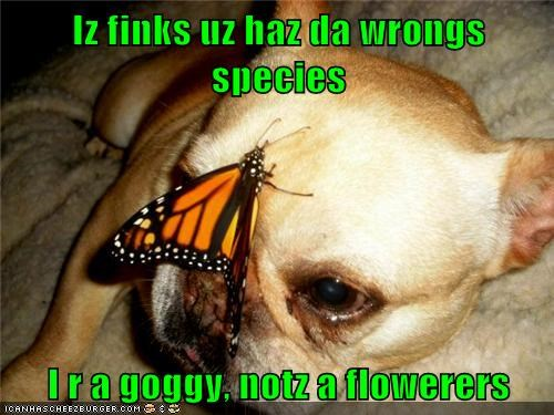 dogs bugs butterfly french bulldogs flowers - 6734884864