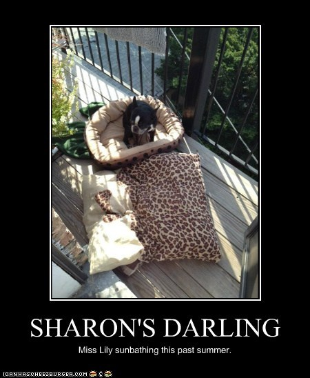 SHARON'S DARLING Miss Lily sunbathing this past summer.