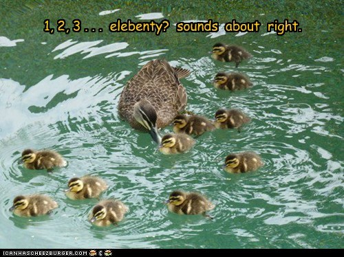 kids,sounds about right,Close Enough,elebenty,ducklings,ducks,counting