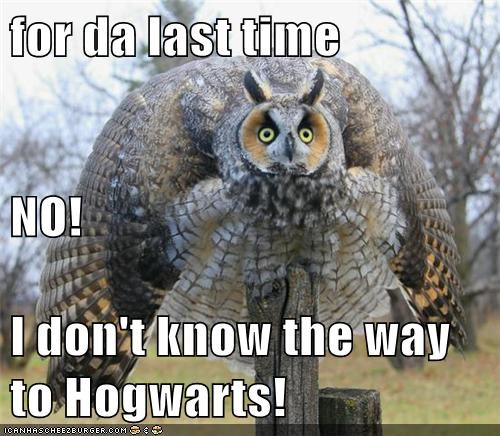 puffed up for the last time Owl angry no Hogwarts