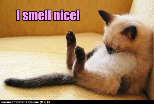 smell captions nose sniff nice Cats - 6735407360