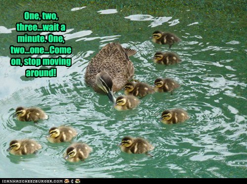 kids,ducklings,ducks,swimming,come on,moving,parent,stop,counting