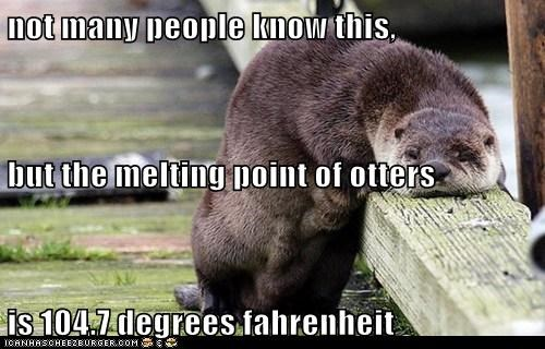 melting,hot,facts,slumped,otter,science