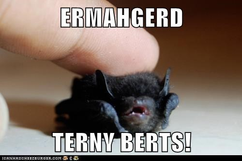 petting baby Ermahgerd tiny bats - 6735732224
