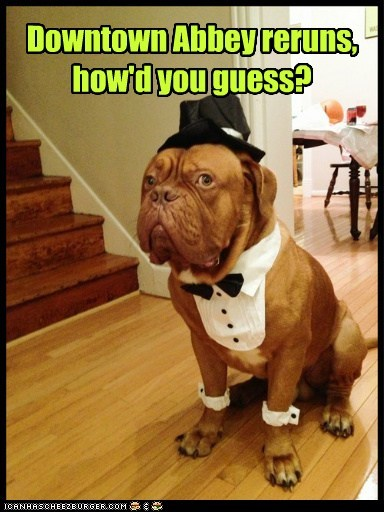 costume dogs downton abbey televison show butler what breed