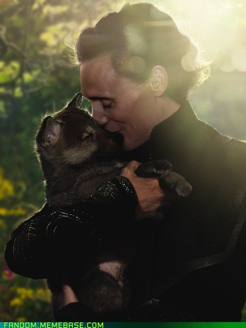 tom hiddleston puppies fangirls - 6736072192