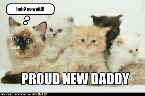daddy captions parent Cats Father - 6736140032