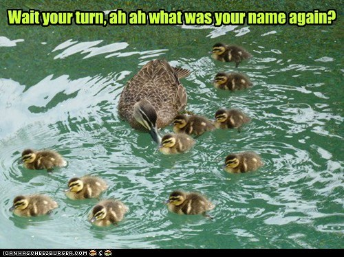 kids,ducklings,ducks,forgot,mom,what's your name