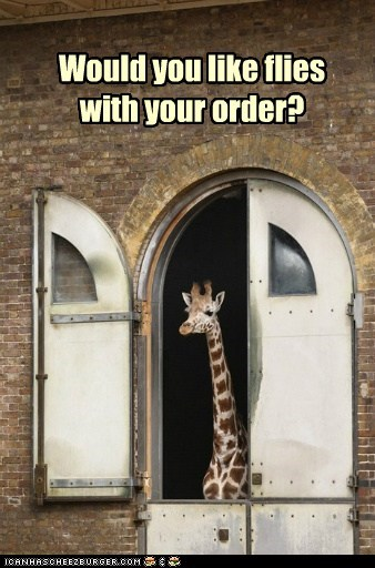 giraffes,drive thru window,fries,fast food,flies