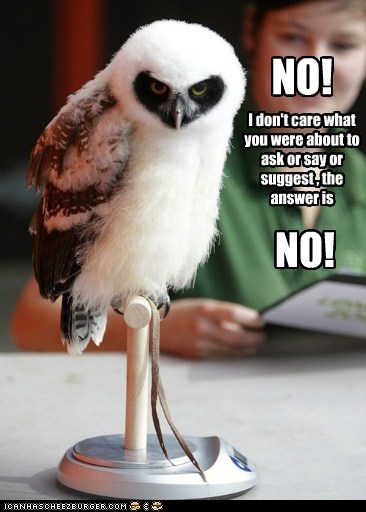 question bad mood answer dont-care Owl angry no